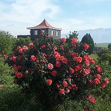 اجاره باغ در کازرون
